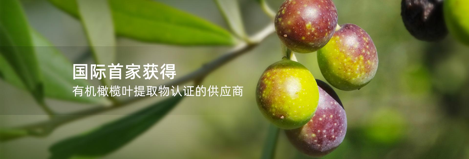 植物提取物之橄榄提取物